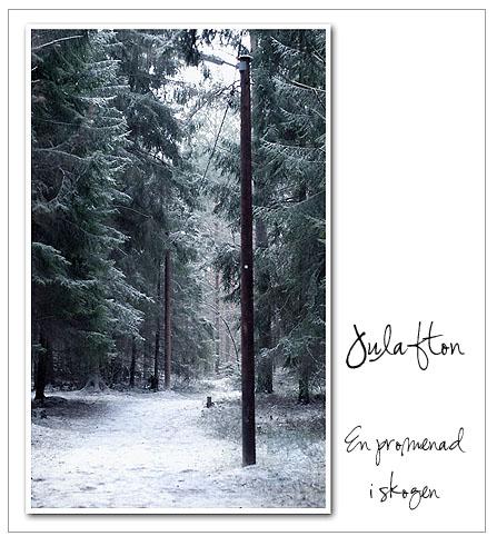 skogspromenad.jpg