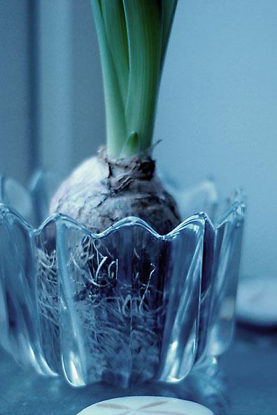 hyacintkristall.jpg