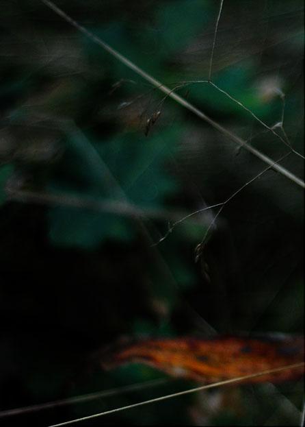 skogen692.jpg