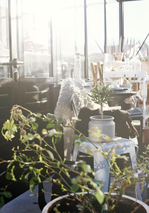 växthusfebruarisol