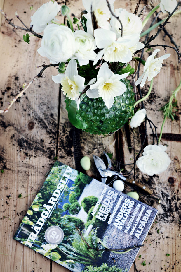 narcisserträdgårdsliv