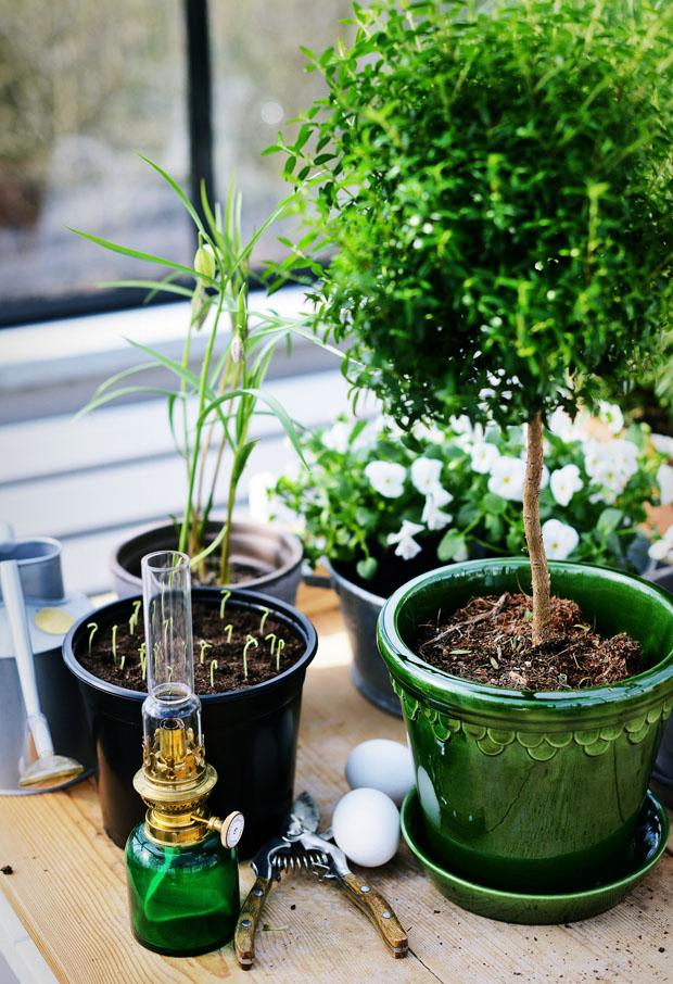 växthusgrönbergspotter