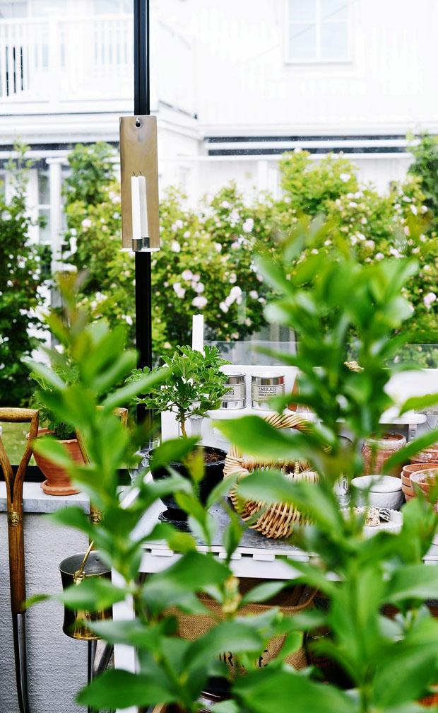 växthusmiljö